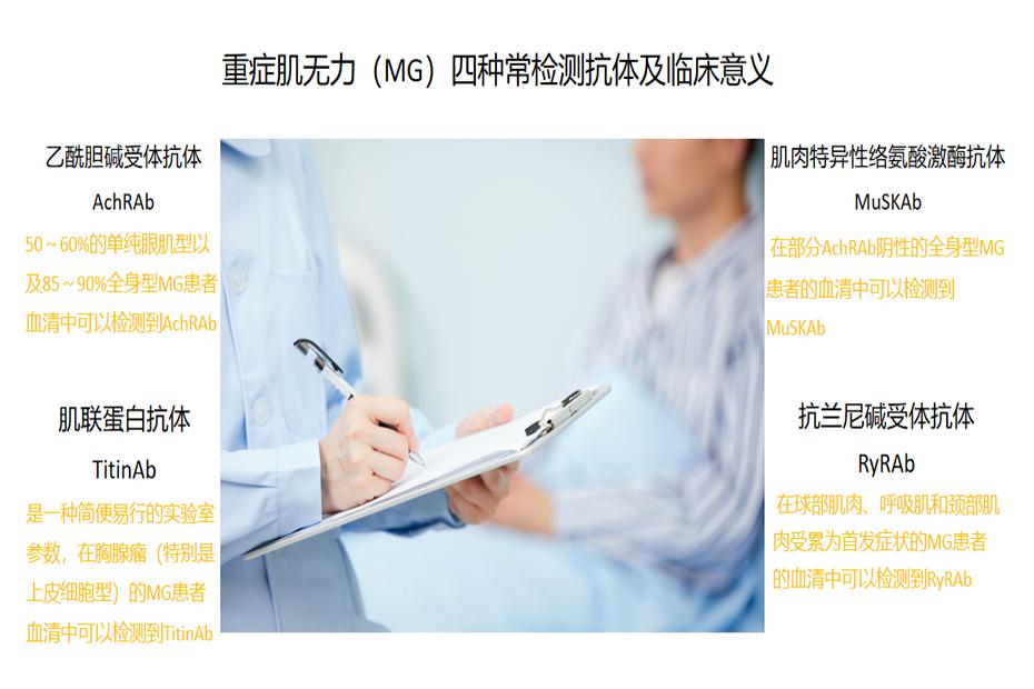 重症肌无力(MG)四种常见检测抗体及临床意义