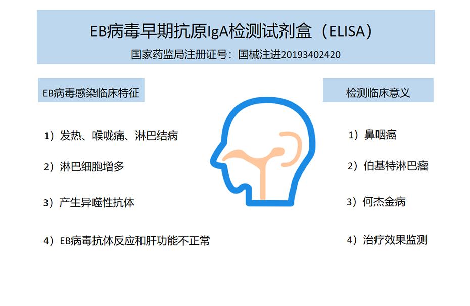 EB病毒早期抗原IgA检测试剂盒(ELISA)