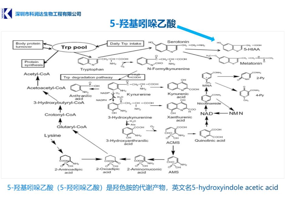 5羟基吲哚乙酸