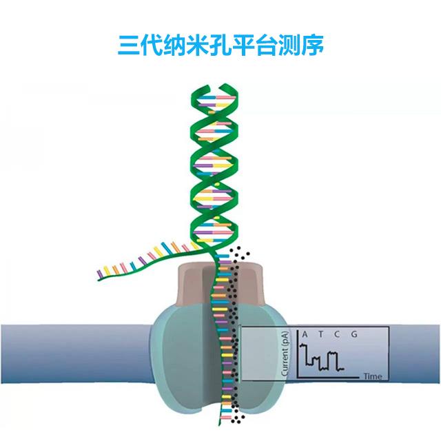 三代纳米孔平台测序(MinION、GridIONMK1)